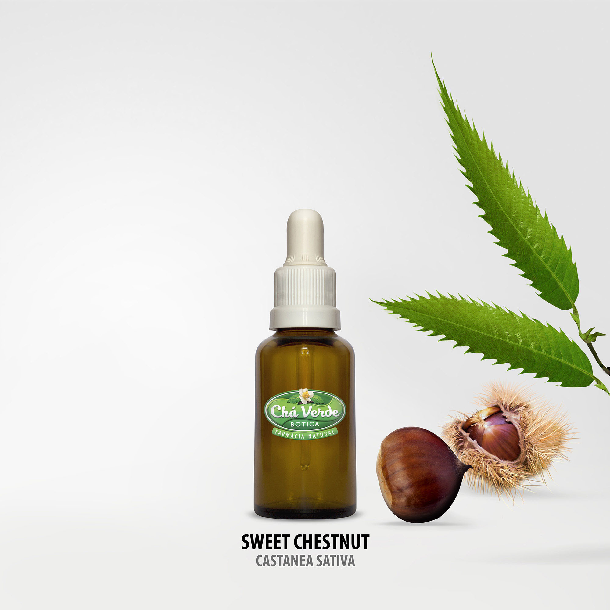 sweet-chestnut-castanea-sativa