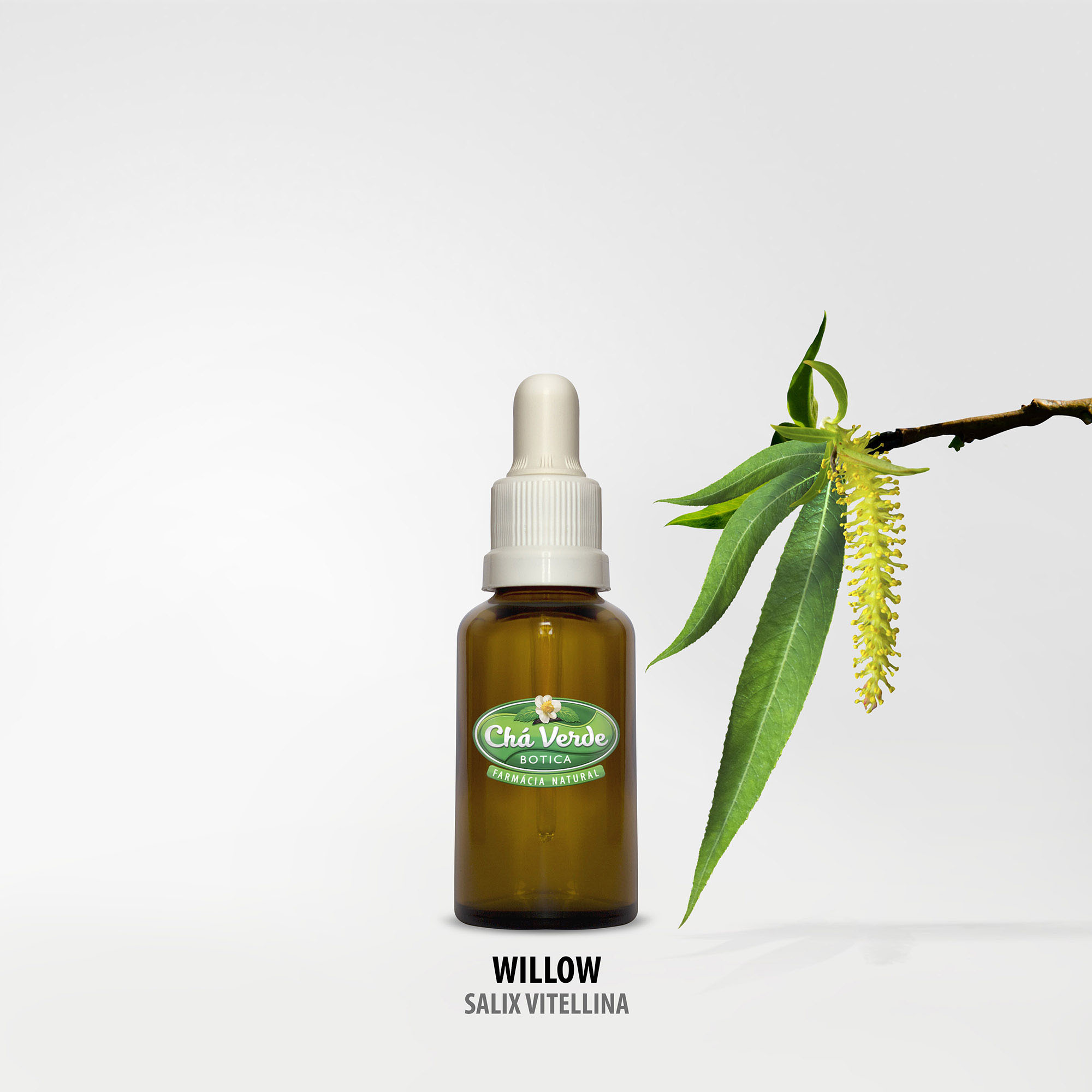 willow salix vitellina comprar